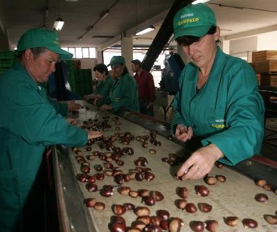 Foto de La Rbale ofrece una jornada sobre el manejo del suelo y plantación de castaños
