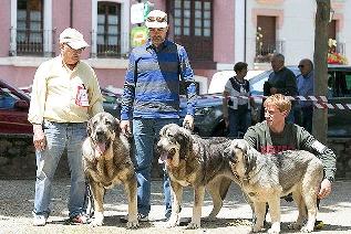 Foto de Villafranca del Bierzo, escaparate canino con el quinto Concurso Monográfico de Mastín Español en la Alameda